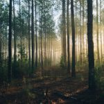 Natural Capital Will Become Prominent Investment Theme
