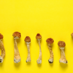Wellness Evidence: Psilocybin Restores Brain Connections Damaged by Stress and Depression